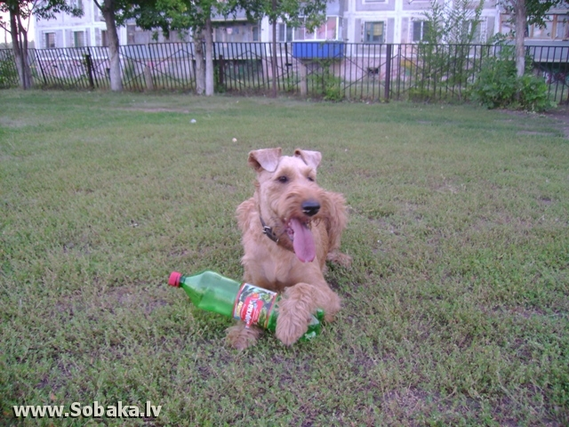 На прогулке. 