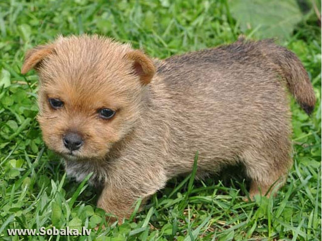 Мальчик. 