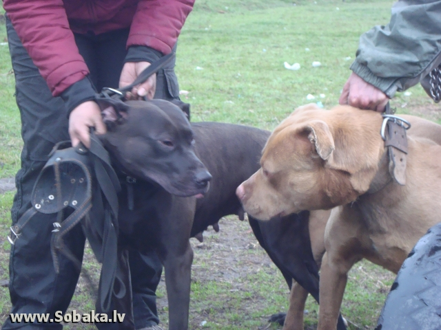 Сын. 