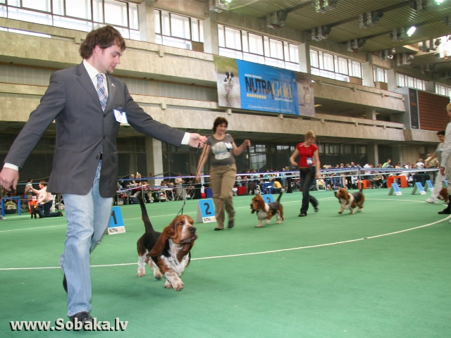 Basset Hound - Dog kennel Chelobaka - Photos - page 1 on ENG