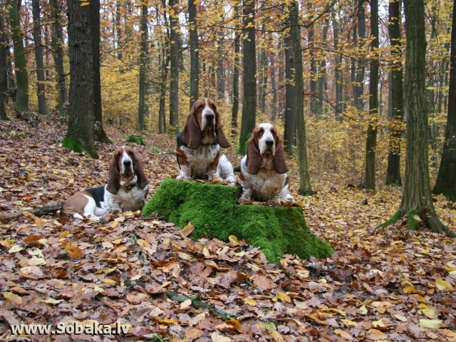 С мамой Chelobaka Elizabett Lula и сестрой Chelobaka Angel Gangster Panda Banda. 