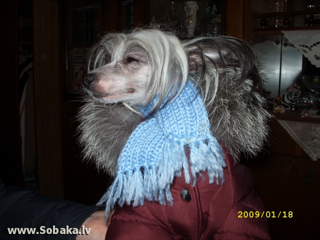А вот и зима. 