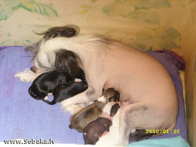И вот наша Жаклин стала мамой. 