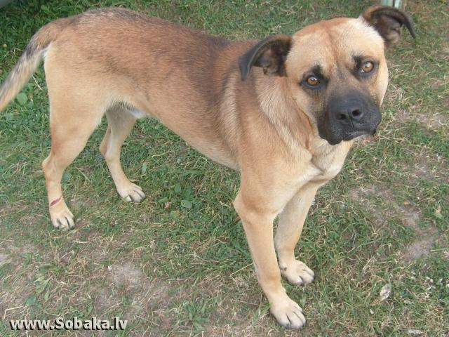 фото метисов собак