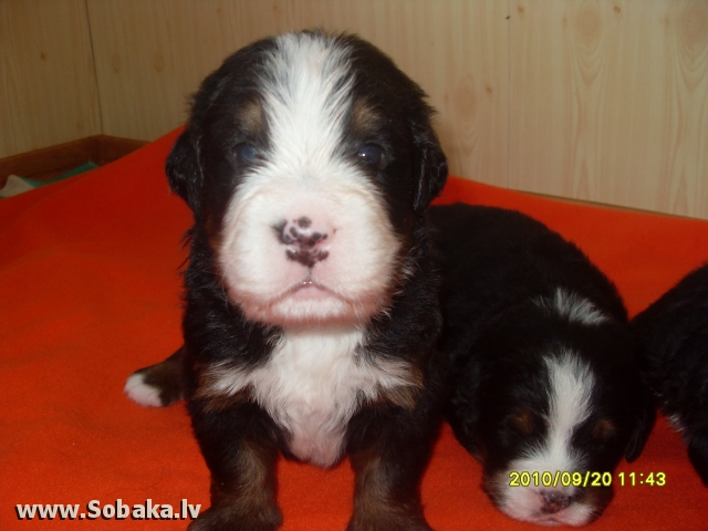 Сынок Надин. 