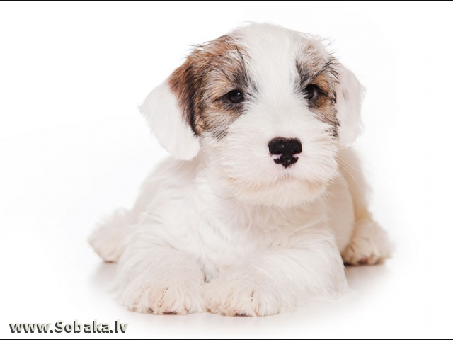 Самый счастливый мальчик.. 