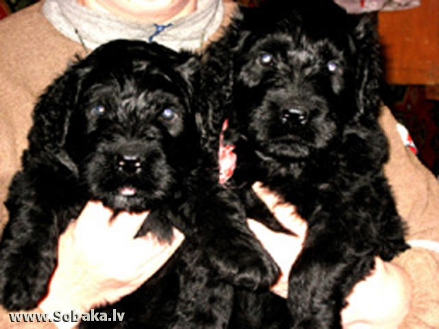 Сладкая парочка. 