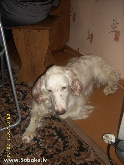 Домашняя. 