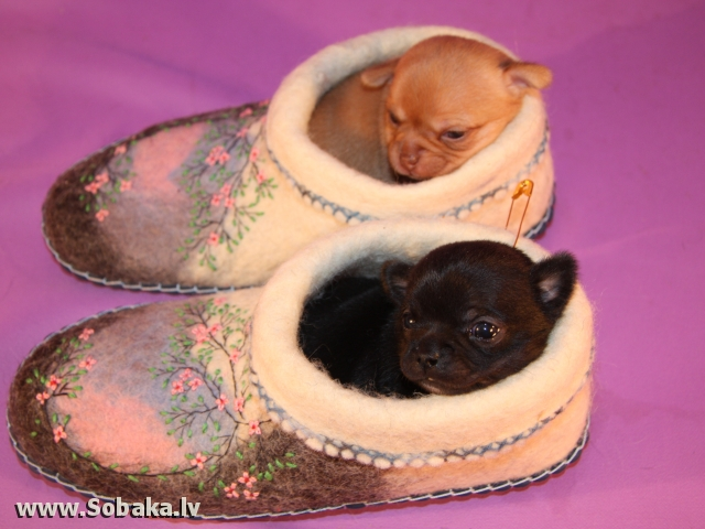 Две сестрички. 