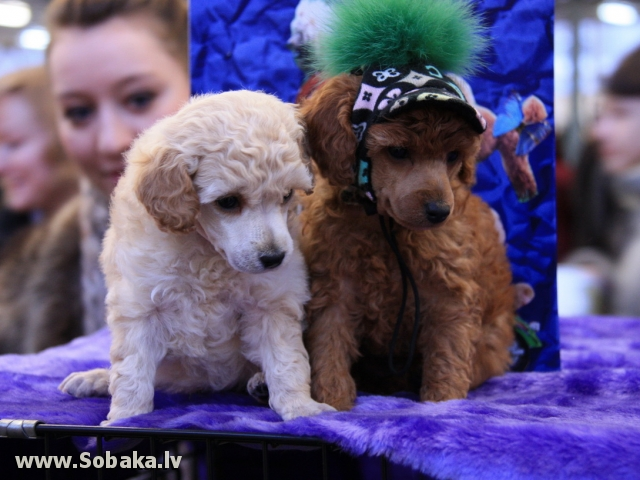 Щенки. 