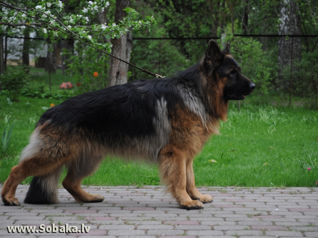 Cezar 1,5 года. 