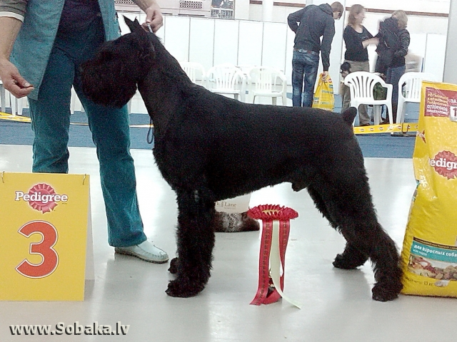 На выставке. 