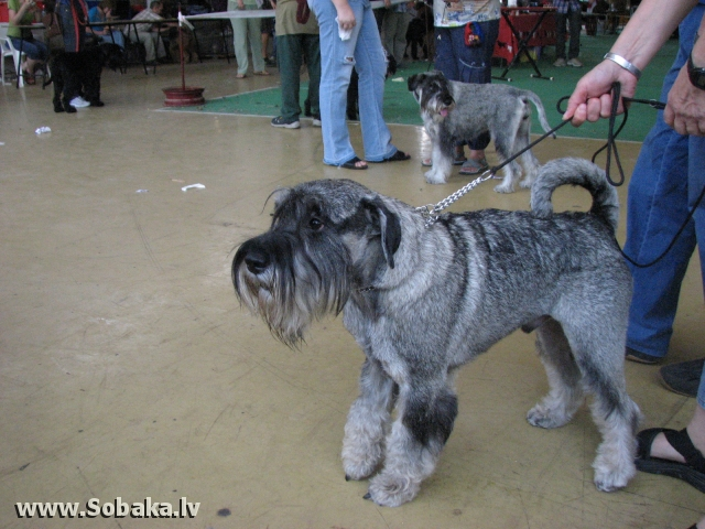 Выставка в Гив, ат Хаим Меухад. 
