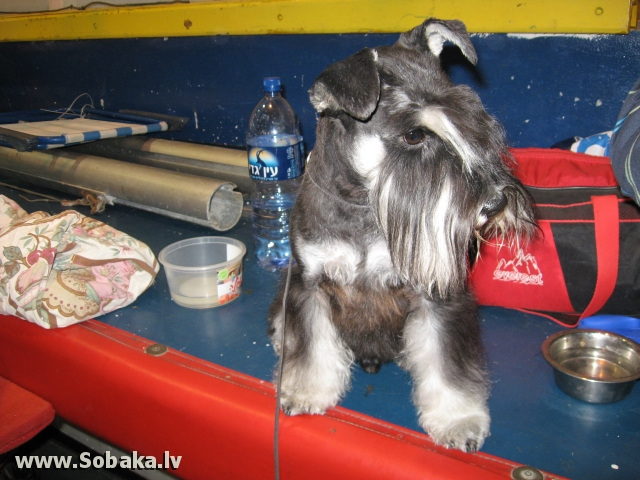 Жду своего выхода в ринг. 