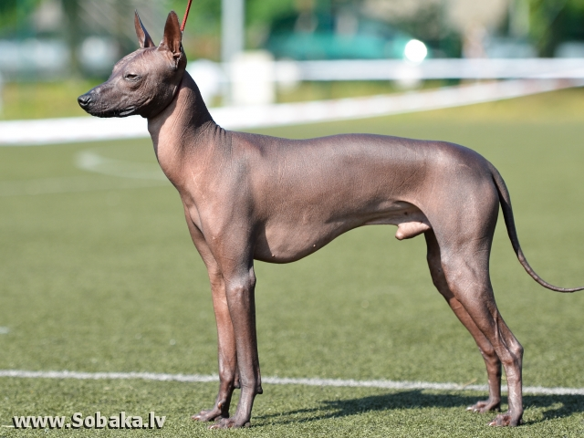 Кубок мера Юрмалы 2011. 