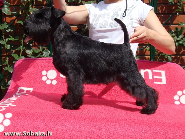 Armald Europa PLus. 