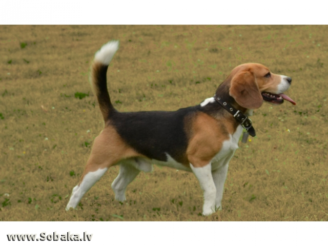 Brigando & Nature. 