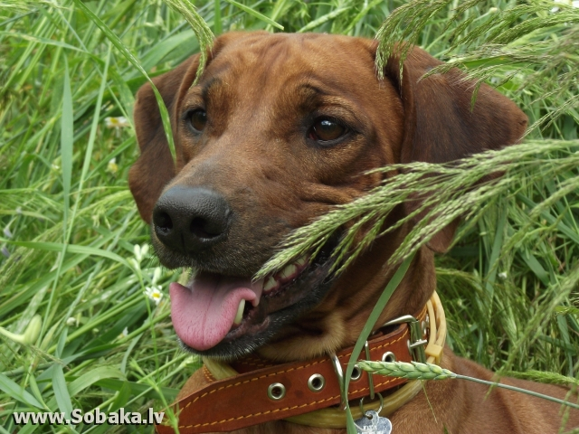 Юта. 