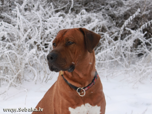 Амулет. 