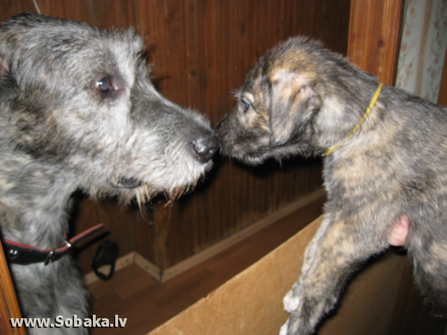 Папа знакомится с сыном. 