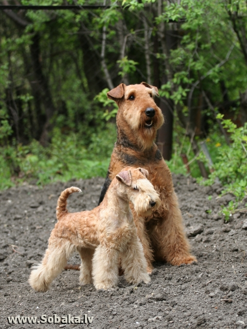 Ева - наш первый лейкленд. 