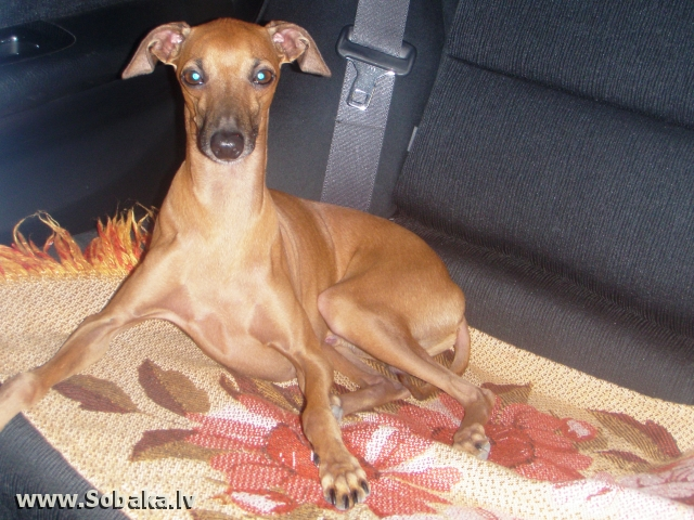 Грибник. 