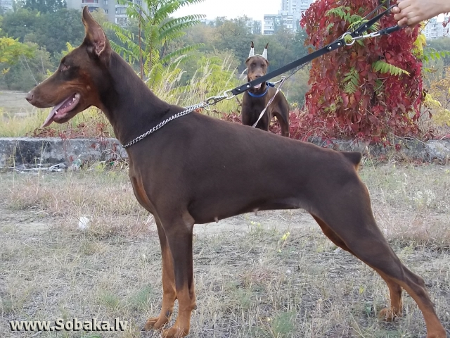 Шери. 