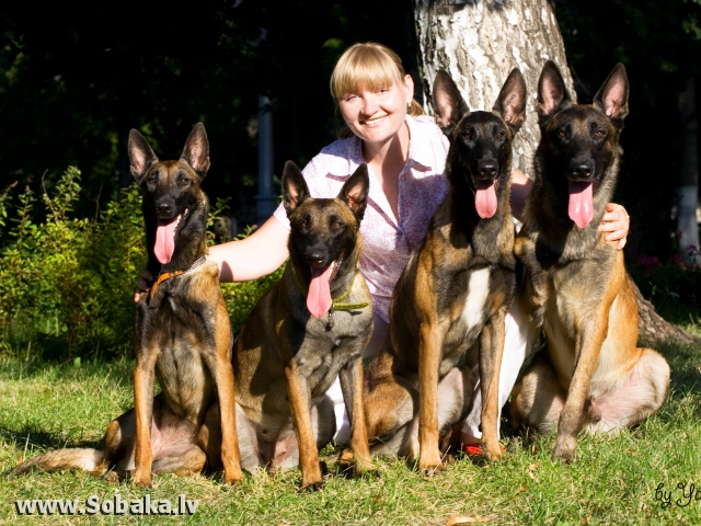 Некоторые из Огненной стаи. 