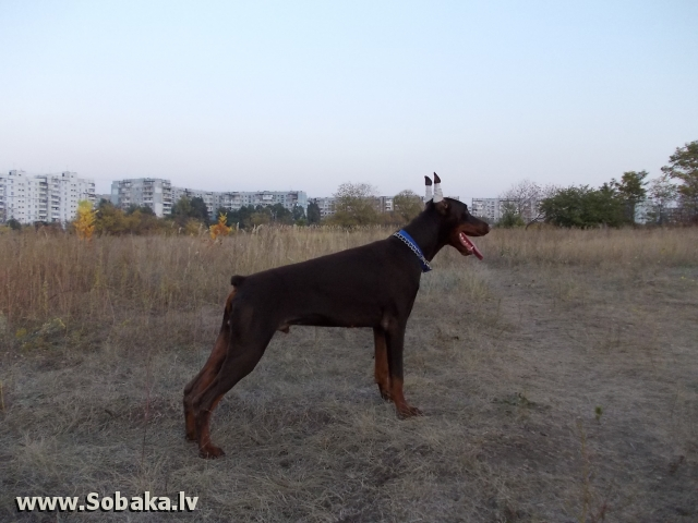 Ерёма. 