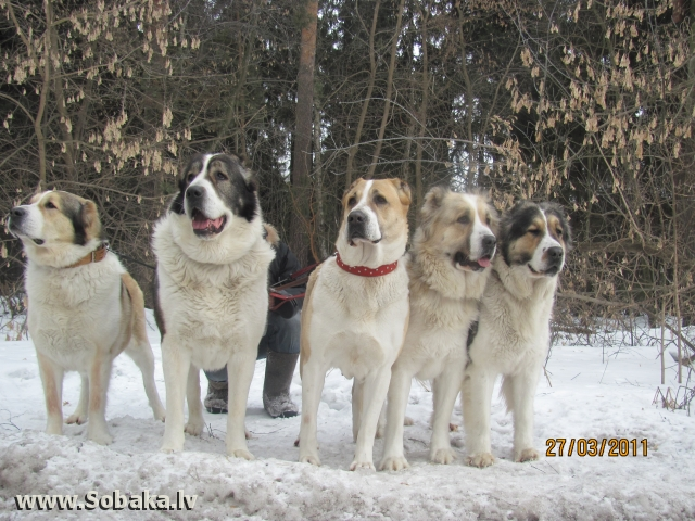 Питомник собак фото 12