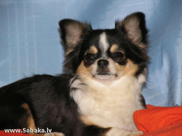 Долорес. 