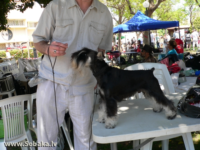 Вот он, Я!. 