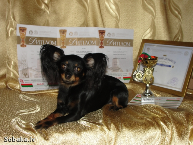 Красотка. 