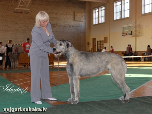 08.06.2012. 
