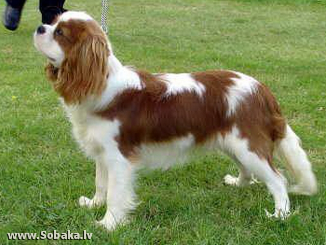 New Dog Pictures For 06 07 2012 On Eng Sobaka Lv