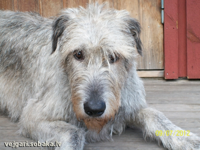 09.08.2012. 