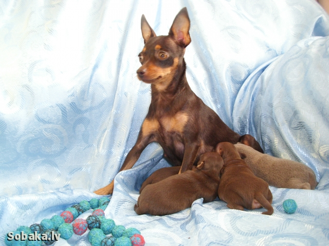 Счастливая мамочка с дочками и сыночком. 