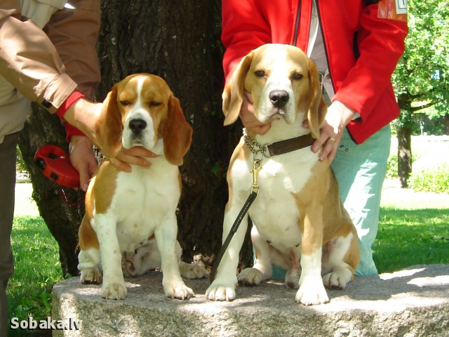 Элвис и Аиша. 