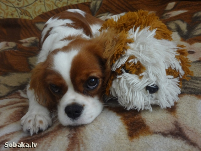 Тиффани. 