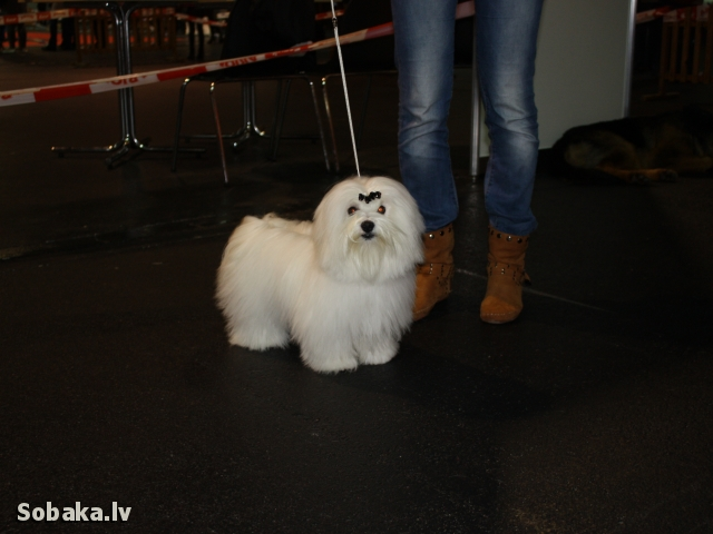 Pet-expo 2012. 