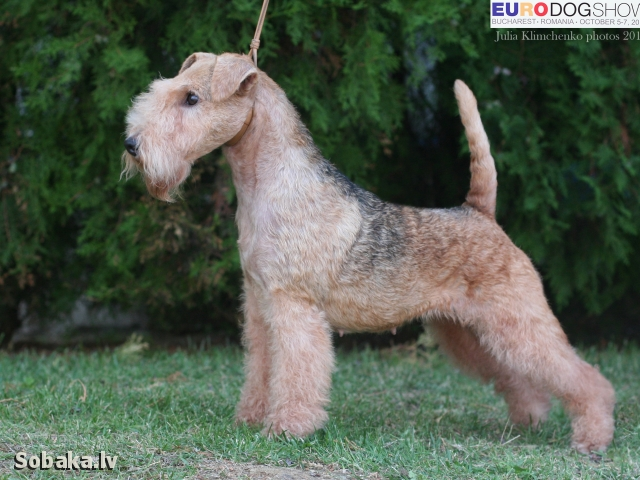 EW 2012. 