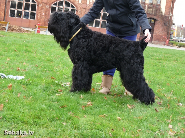 Robin Good iz Chigasovo. 