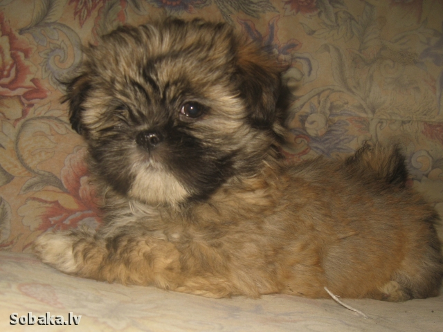 Щенок. 