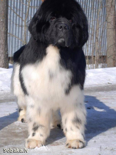 Бублик. 