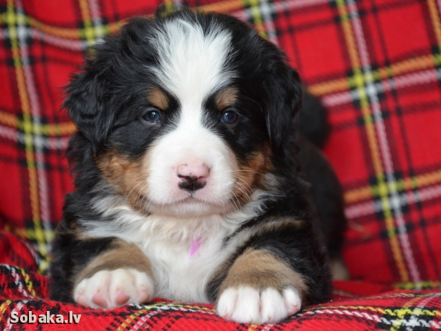 Детка на продажу. 