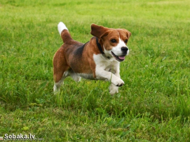 Курсинг. 