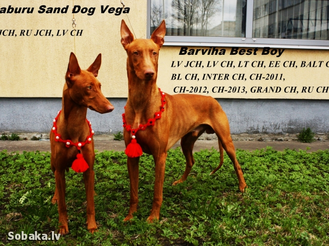 Best&Vega. 