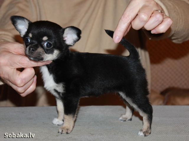 Вива. 