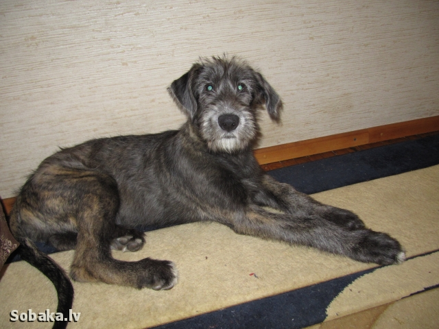 12.04.2014. 