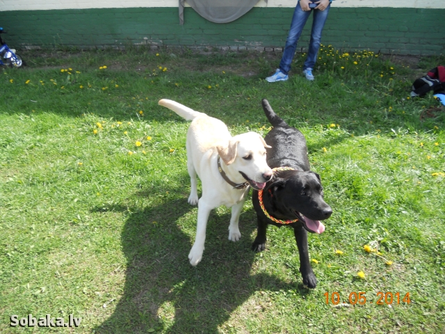 Выставка 10/05/2014 класс Юниоров. 